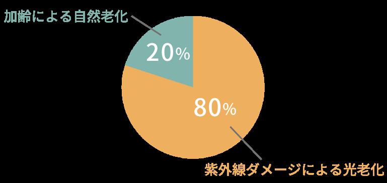 肌老化の原因グラフ