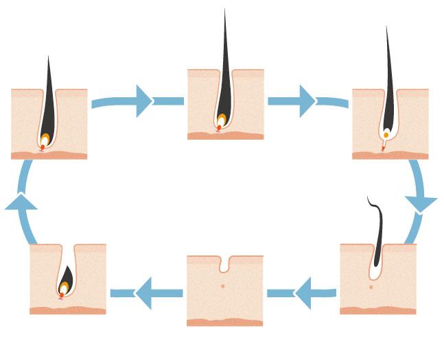 医療脱毛と毛周期の関係