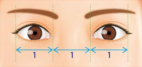 理想的な目と目の間のバランス